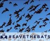 https://www.facebook.com/savebats