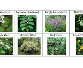 Aggressive Invasive Plants