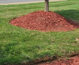 This red dyed volcano mulch makes it look like this tree is spewing lava!