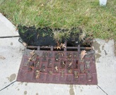 Focus Item #1 Used motor oil dumped down a storm drain the Cleveland-area.