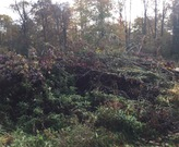 A huge brush pile in a conservation easement.