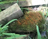 Some moss on a rock pile.