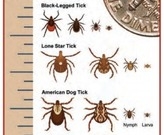 Various Tick Species and Sizes.  Photo credit: Portage Health System