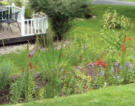 Not Wild About Wet Yards on Landscaping Ideas For Wet Backyard id=92721